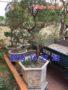 Chậu đá đẹp trồng cây 04