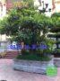 Chậu đá trồng cây đẹp 53