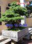 Mẫu chậu đá tự nhiên đẹp trồng cây 48